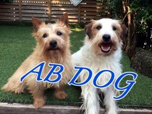 AB DOG(エービードッグ)