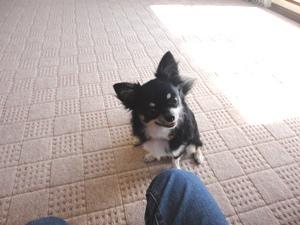 Dog&You Training School