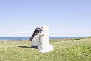 愛犬との暮らし方 ステップ