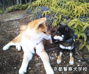 京都警察犬学校-問題行動専門しつけ教室-